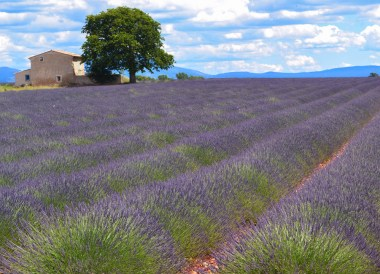 Lavender in Provence, Road Trip in France Southern Borders June