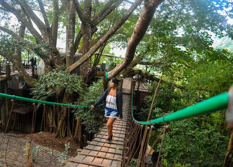 Fanfan Wilson, Giant Tree House Coffee Shop in Chiang Mai Homestay
