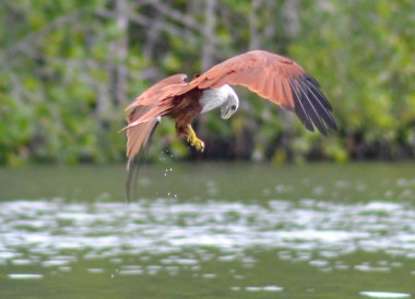 Eagle Feeding, Resorts World Langkawi in Malaysia