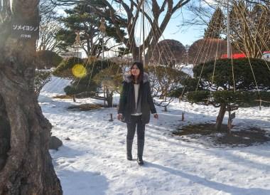 Yukizuri Trees, tourist attractions in hakodate hokkaido japan