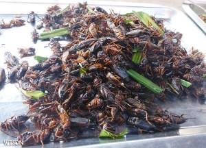 Eating Insects, Best Asian Street Food Eating Cheap in Asia