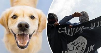 LLL-Live Let Live-ISIS terrorists are using dogs strapped with explosives to attack the Iraqi Forces