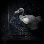 image of a dodo