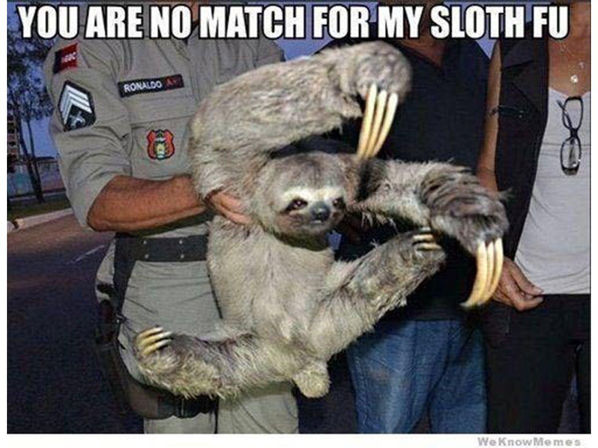 The 8 Best Sloth Memes