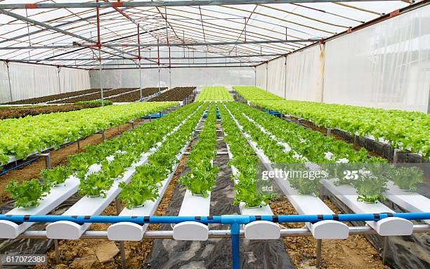 Business plan of greenhouse vegetable business business report template