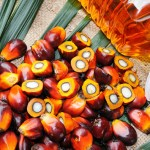 PALM OIL PRODUCTION BUSINESS PLAN WITH FINANCIAL ANALYSIS