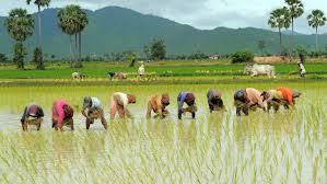 Download Feasibility Study for Rice Production in Nigeria