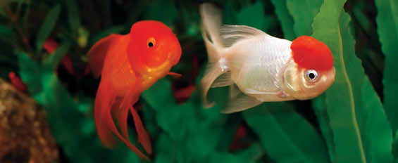 Fish Pond Supplies