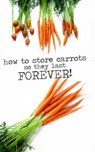 Did you know orange carrots are a product of Dutch patriotism? Learn about that and more in this all-inclusive guide to the carrot!