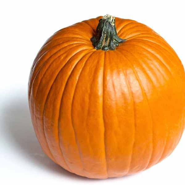 Photo of a pumpkin on a white background