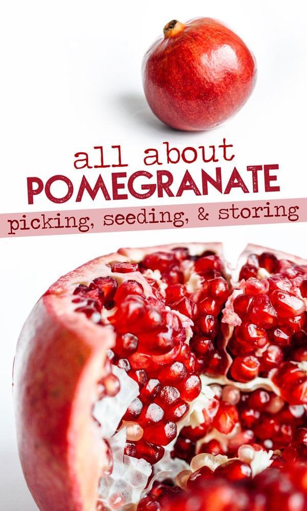 Everything you need to know about pomegranate. How to choose the perfect one, how deseed a pomegranate, how to store it, and more. Pom appetit! #pomegranate #fruit #fallfood #seasonalfood #winterfood