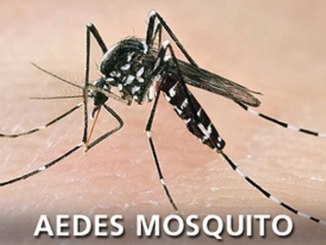 Dengue Fever by Aedes Mosquito