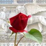 San Marco e il Boccolo: due eventi speciali