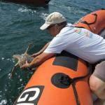 Ricomincia da Venezia il viaggio di Chiara, la tartaruga marina