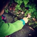 Naturabenteuer Schnecken entdecken
