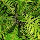 #darumgrüner-Farn-Neuanfang