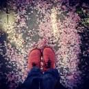 darumgrüner-Frühling Blütenblätter