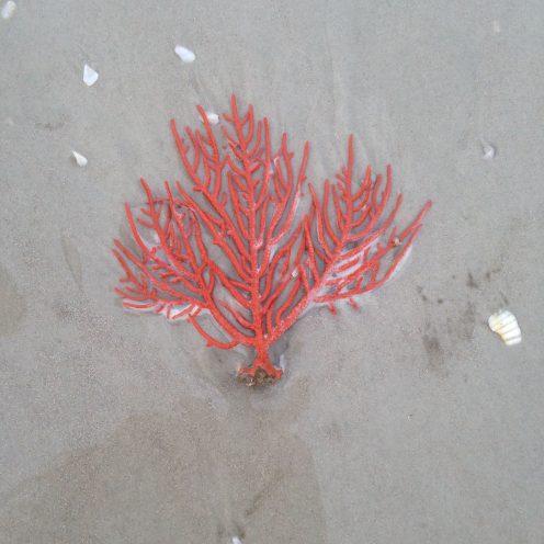 ocean plant New Smyrna Beach