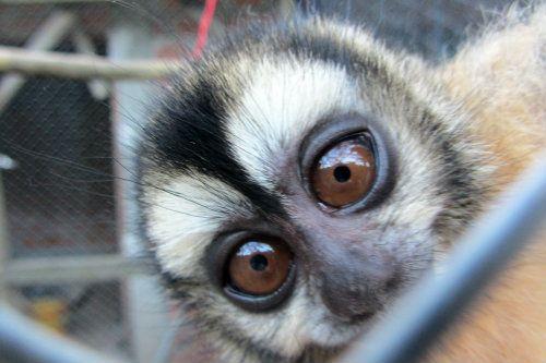 volunteer with Monkeys in Bolivia