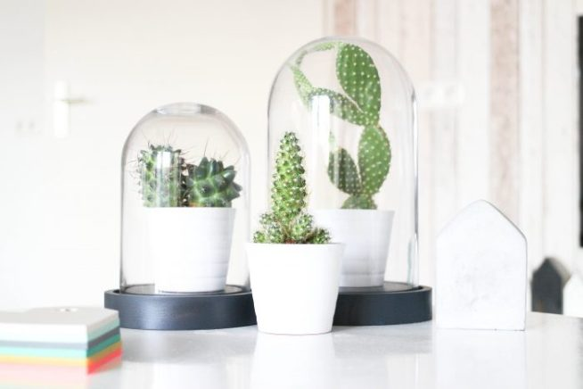 Styling tip - cactus - Live love interior