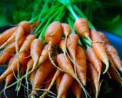 Baby carrot bunch
