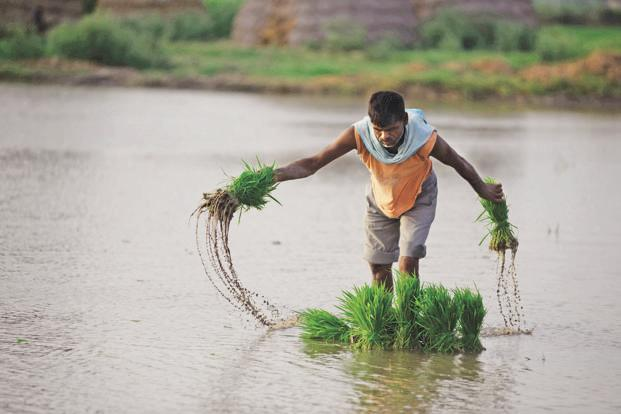 Budget 2018 has not talked about reducing subsidies and increasing investments in the agriculture sector. Photo: Pradeep Gaur/Mint