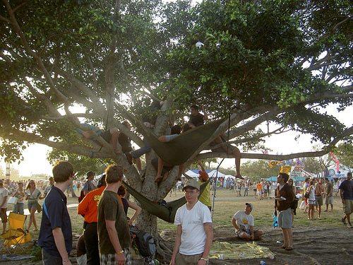 monkeysintrees.jpg