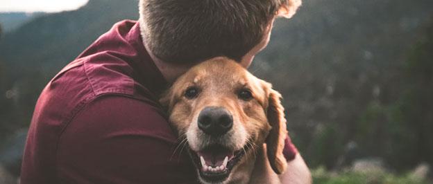 Consider adopting an emotional support pet