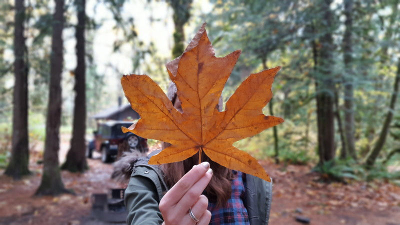 Fall in the pacific northwest