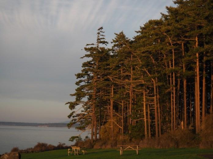 Trees Washington Park Anacortes