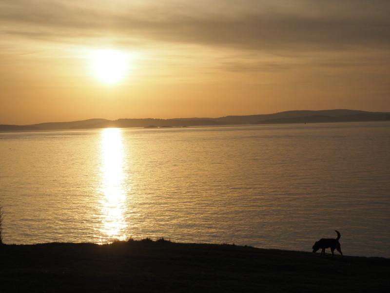 Sunset at Washington Park -dog