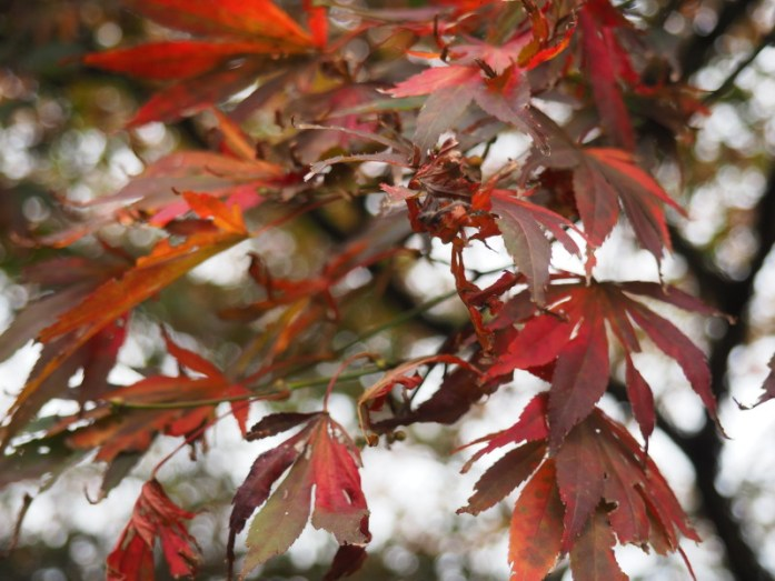 Leaves in Vancouver