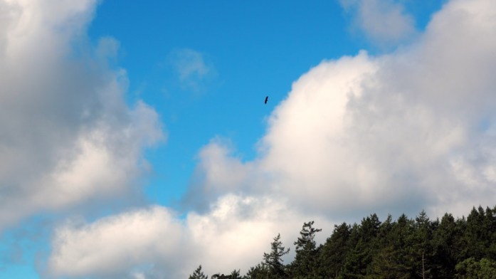 Sighting Bald Eagles at English Camp, San Juan Island - LiveRecklessly