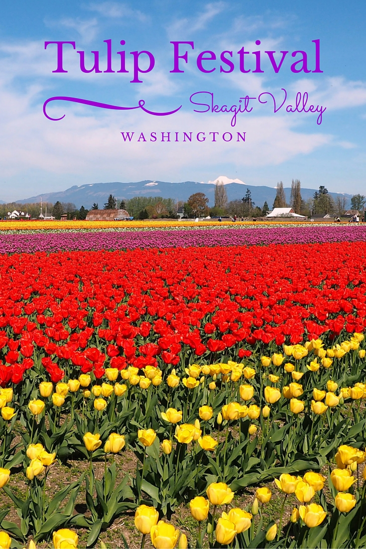 Skagit Valley Tulip Festival 2016. In April each year, millions of tulips burst into bloom for one of Washington state's most popular festivals. It's a beauty to check out the vibrant colours popping against the backdrop of the cascade mountains. Read more at www.liverecklessly.com