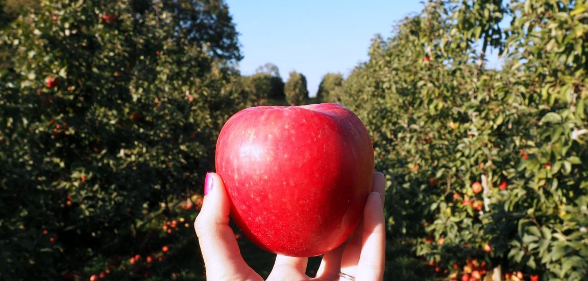 Experience the best of fall with an afternoon of apple picking, gin tasting and sweet treats at the picturesque BelleWood Acres in Bellingham, Washington! Read more at www.liverecklessly.com