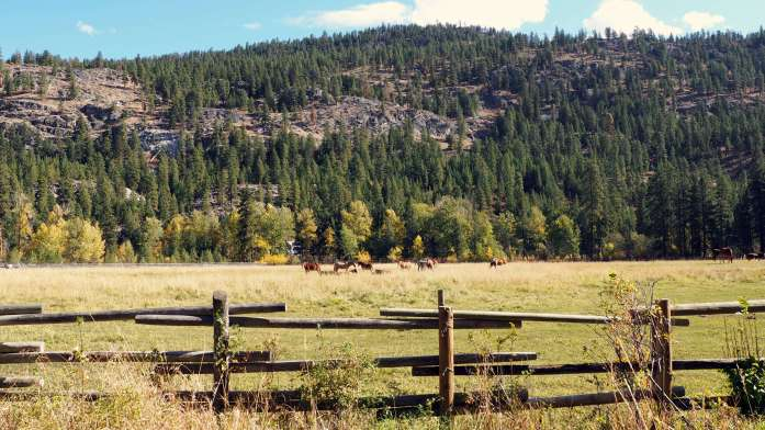 edited-horses-at-methow-valley