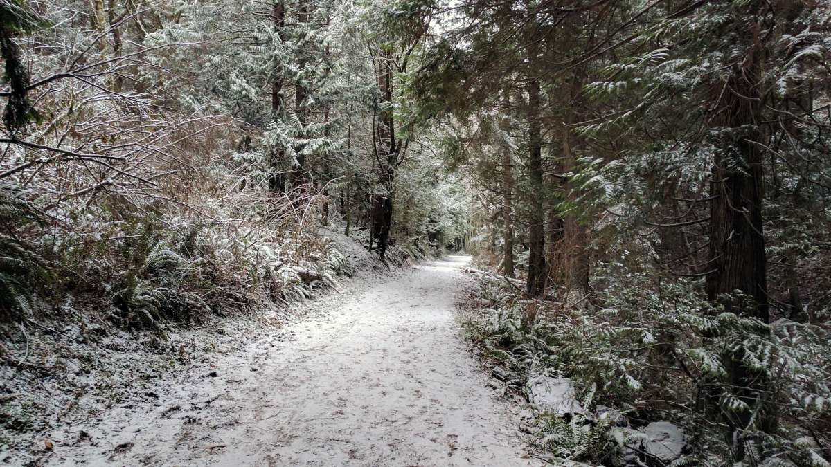 Whistle Lake trails Snow in Anacortes - liverecklessly.com