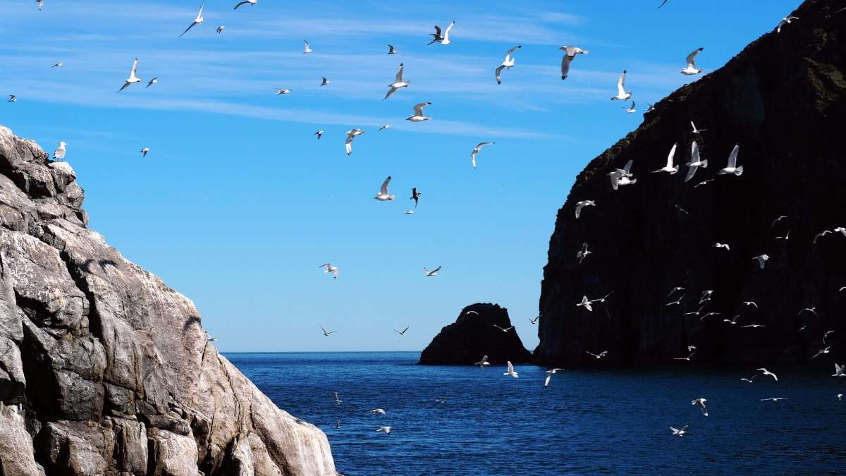 Alaska in Photos - sea birds in Kenai Fjords National Park - Live Recklessly