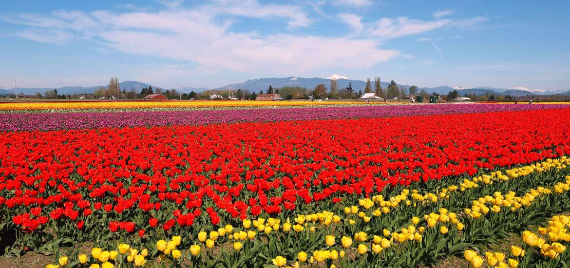 8 sweet spring weekend escapes in Washington State - Live Recklessly