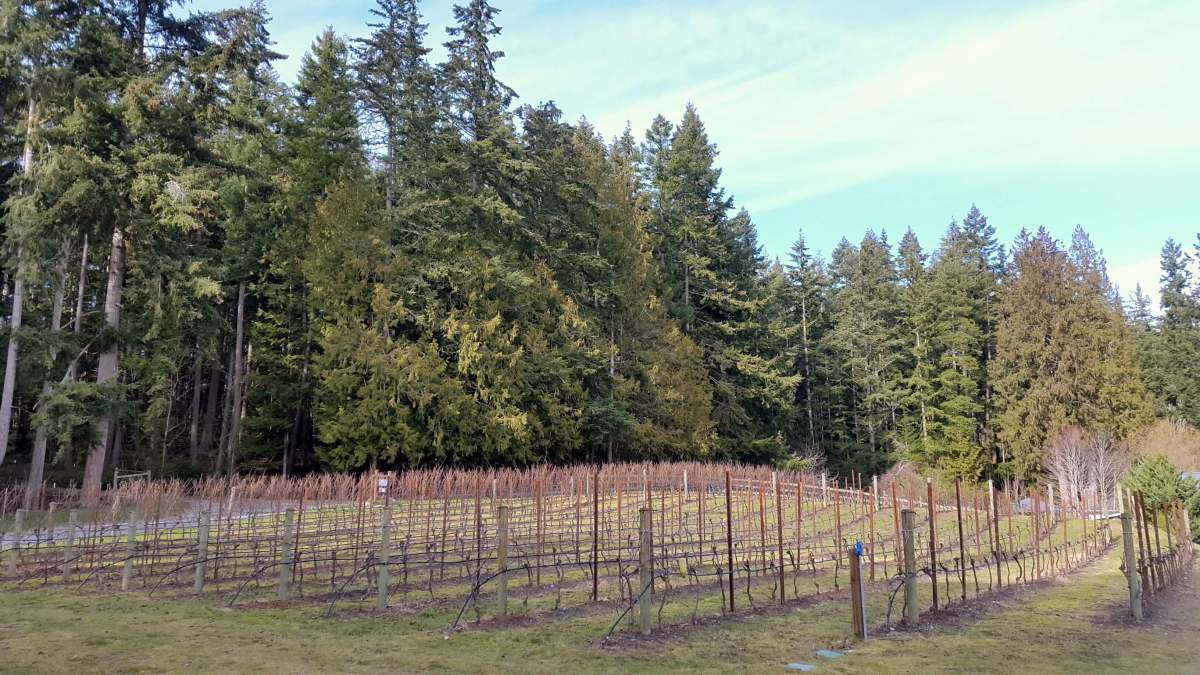 February Expat Escapades 2017 - Whidbey Island Wine Trail - Live Recklessly (2)