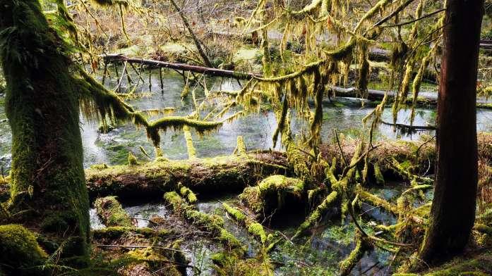 Hoh Rainforest Olympic national park road trip Washington
