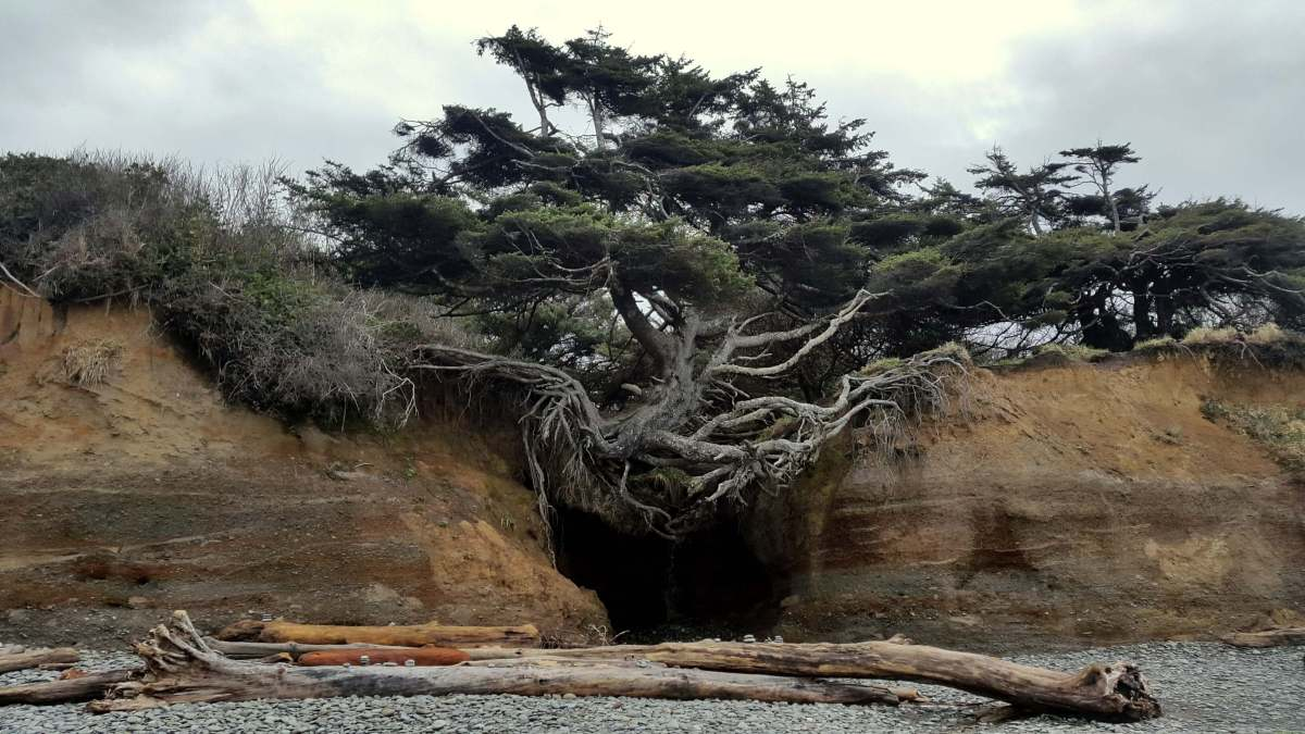 Kalaloch Tree - An Olympic National Park road trip - Live Recklessly