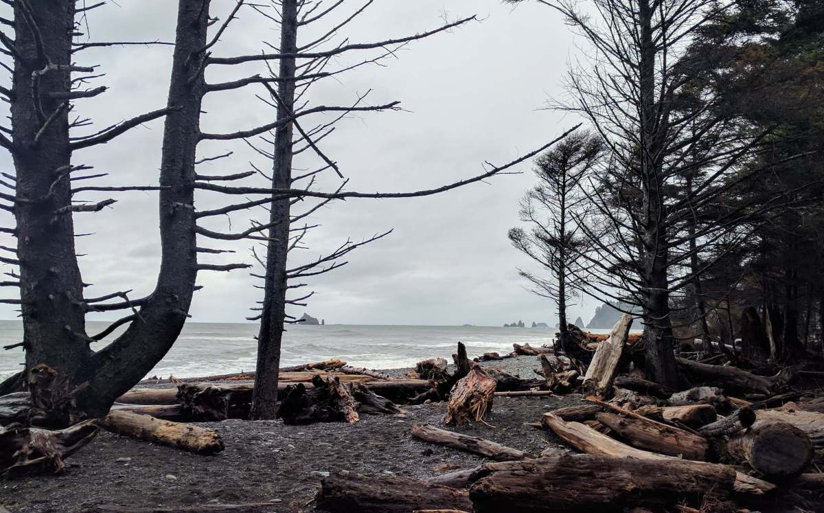 Rialto Beach driftwood - An Olympic National Park road trip - Live Recklessly