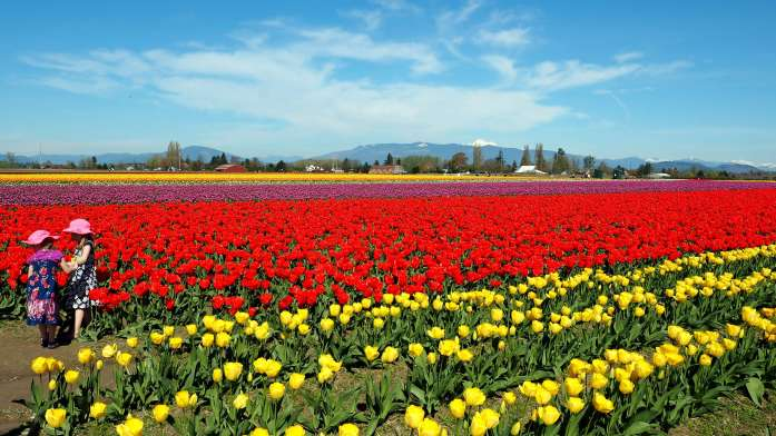 tulip fields - ultimate weekend guide to la conner Live Recklessly