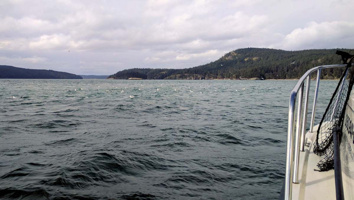 Seabirds and Salmon fishing in the San Juan Islands Washington State - Live Recklessly