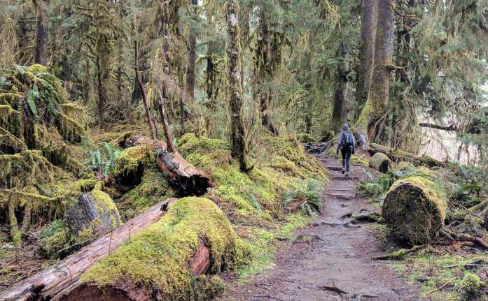 Hoh Rainforest trails Olympic National Park Expat Escapades March 2017