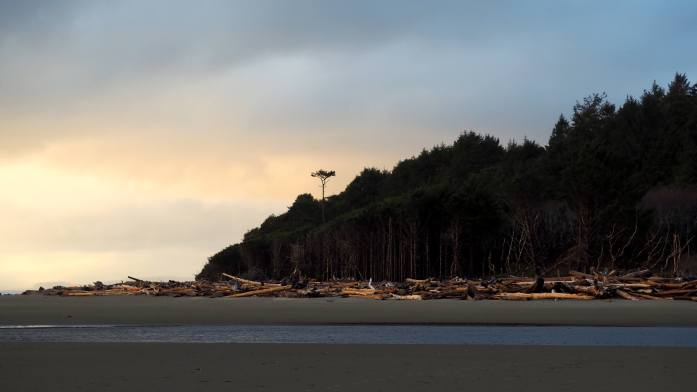 Kalaloch Beach views Olympic National Park Expat Escapades March 2017