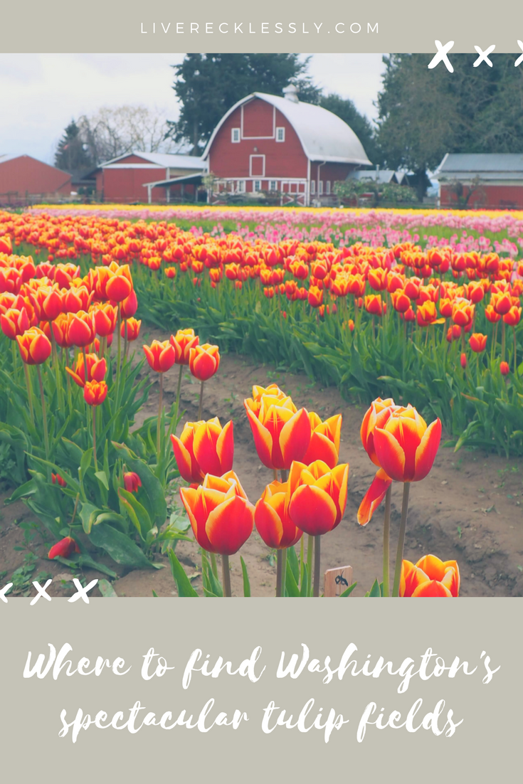 Did you know that Washington State is home to spectacular tulip fields? Tulip Town Skagit Valley is a beautiful place to enjoy these flowers as they bloom each spring. A taste of Holland right here in the USA. Read more and see the pics at Live Recklessly!