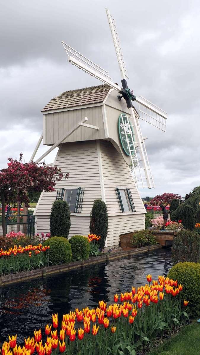 Windmill at Tulip Town Skagit Valley