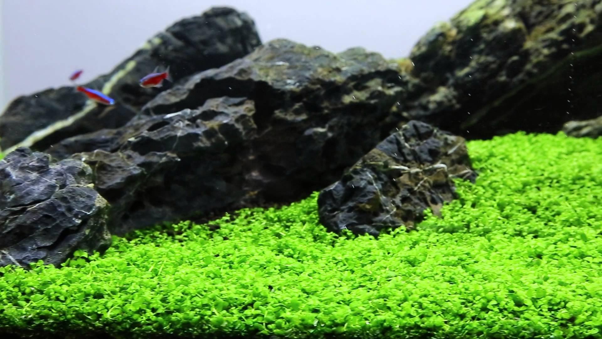 Aquarium Plants Beginners